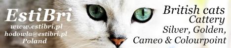 Hodowla Kotów Brytyjskich EstiBri*PL